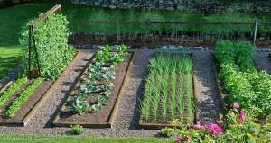 basic-vegetable-garden-and-vegetable-gardening-vegetablegardeninglife-19